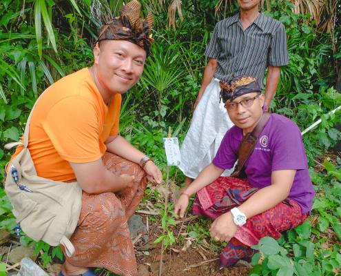 bali mandira tree planting program 2
